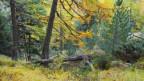 Ein Lärchenwald im Wallis