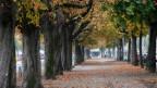 Der Journalist Andreas Minder und der Fotograf Robert Brügger suchten für ihr Buch «Von Menschen und Bäumen» die grünen Gesellen in Bern auf und erzählen die Geschichten von Alleen, Parks und Wäldern.