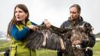 Wildbiologin Franziska Lörcher und Sarah Isler vom Tierpark Goldau mit einem der Bartgeier.