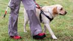 Eine blinde Person mit einem Blindenhund