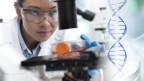 Laborant mit Stammzellen bei der Arbeit