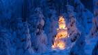 Verschneiter Tannenwald bei nacht, eine Tanne ist mit einer Lichterkette geschmückt.