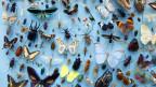 Viele bunte Schmetterlinge und Käfer auf hellblauem Untergrund