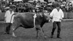 Schwarz/Weiss-Bild von einer Viehversteigerung