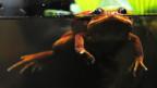 Amphibiensterben