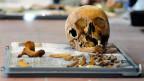 Ausgegrabene Knochen in St. Gallen, 2009.