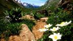 Heute ist klar: Die Biodiversität in den Alpen nimmt zu.