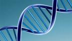 Ein DNA-Model.
