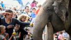 Das Verhältnis zwischen Mensch und Elefant