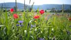 Wie stark ist die Pflanzenvielfalt wirklich bedroht?