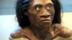 Rekonstruktion eines Homo Floresiensis.