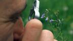 Die Biodiversität nimmt in der Schweiz weiter ab.