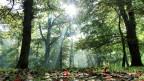 Die Sonne scheint durch die die Baumkronen in einen Wald.