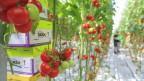 Schlechte Schlagzeilen über chemische Pestizide geben biologischem Pflanzenschutz Auftrieb.