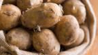 Nur die Hälfte der Kartoffeln von Schweizer Äckern landen auf unseren Tellern.