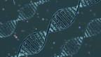CRISPR (Clustered ReCrispr sind Abschnitte sich wiederholender DNA, die im Erbgut von vielen Bakterien und Archaeen auftreten.