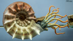 Ein originalgetreu rekonstruiertes Meerestier aus der Altsteinzeit im Fossilienmuseum von Meride.