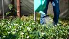 Kann Gartenarbeit therapeutisch sein?