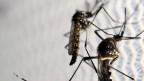 Zwei Mücken auf einem Netz