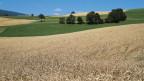 Getreide in der Schweiz