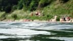 Dank neuen Gesetzen ist das Rheinwasser heute wieder sauber.