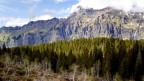 Wald, im Hintergrund Berge.