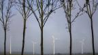 Bäume und Windräder nebeneinander auf einer Allee