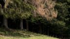 Blick in einen Nadelwald