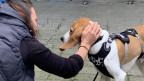 Cornelia muss erkennen, dass Hund Bruno nicht in ihr Leben passt.