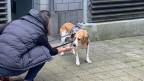 Bruno ist ein Angsthund. Das macht den ersten Kontakt mit ihm schwierig.