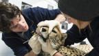 Audio «Nichts mit «Jööö»: Wildes Leben in Schweizer Zoos» abspielen.