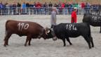 Audio «Eringer: Die schönsten Kühe Europas zeigen, was sie drauf haben» abspielen.