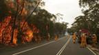 Feuerwehrmannschaften versuchen einen Waldbrand in der Nähe von Sydney zu löschen.