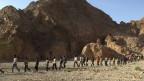 Afrikanische Flüchtlinge an der Grenze zu Ägypten