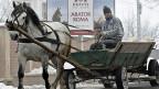 Ein Pferdewagen vor der rumänischen Schlachterei, aus der das skandalträchtige Pferdefleisch stammen soll.