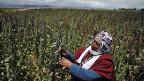 2013 ist das Jahr der Quinoa.
