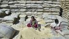 Arbeiterinnen in einem Getreidelager nahe der nordindischen Stadt Amritsar.