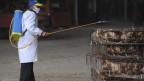 Ein Mitarbeiter besprüht notgeschlachtete Hühner mit Desinfektionsmittel in Hefei, Provinz Anhui, China, am 5. April 2013.