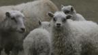 Islands Landwirtschaft setzt auf neue Produkte