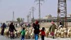 Immer mehr Menschen in Syrien verlassen ihre Dörfer, hier syrische Familien und Schafe am Rand von Damaskus.