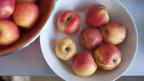 Frische Äpfel das ganze Jahr durch
