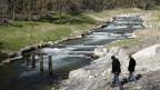 der renaturierte Fluss Versoix