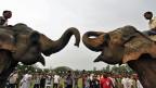 Eine von vielen Tourismus-Attraktionen Indiens: Elefanten-Kämpfe in Boko