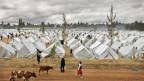 Zeltlager: Zu tausenden flüchteten die Menschen in Kenia vor der Gewalt nach den Wahlen 2007.