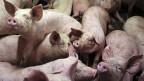 Zumindest im Geiste beginne mit der Reform eine neue EU-Landwirtschaftspolitik, sagt der kritische Franzose José Bové.