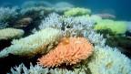 Ein schwarzer Tag für alle, die sich um das grösste Korallenriff der Welt Sorgen machen - das Great Barrier Reef - ein 2000 Kilometer langes Unterwasserparadies.