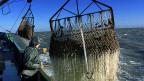 Fischkutter in der Nordsee.