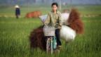 Die Stimmen der Reisbauern im Norden Thailands sind der thailändischen Premierministerin nicht mehr sicher.
