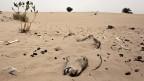 Nicht zum ersten Mal ist die Sahelzone von einer Hungersnot betroffen.