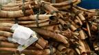 Gut 2900 Kilogramm beschlagnahmtes Elfenbein.